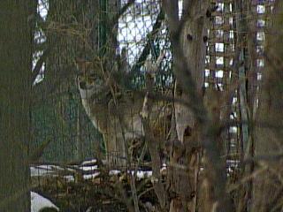 Apr1409-coyotenoon
